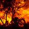 Firey-southern-sky