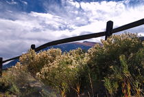 Wildflowers in Colorado by Julie Hewitt