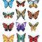 12papillons
