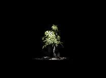 Small Tree by Ryan Brosnan