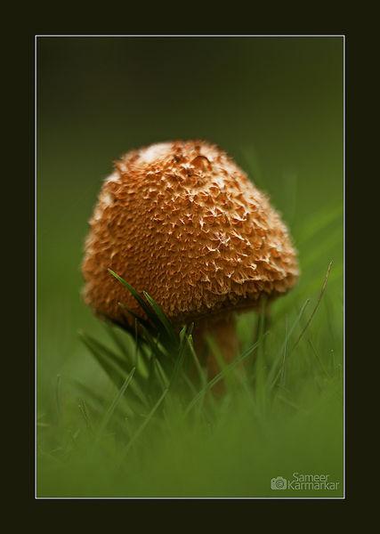 Orange-mushroom