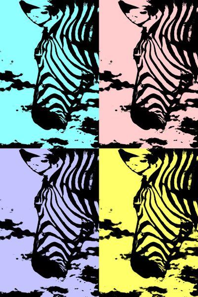 Zebra-collage