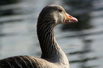 Diner for the goose by Oliver Finzel