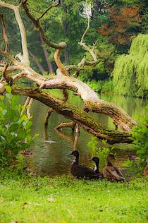 Im Park by pahit