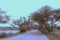 road to pedra von anupama sadasivan