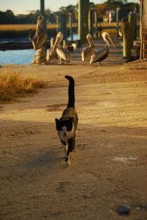 Cat & Pelican Harmony by Rebecca Shaw