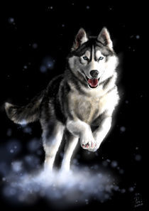 siberian husky dog digital painting by Timi Pall