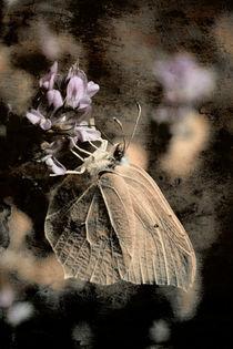 Schmetterlinge in der Kunst 2011 von Falko Follert