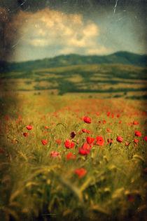 Poppies II von David Fiscaleanu