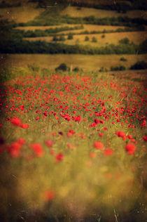 Poppies von David Fiscaleanu