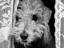'Doggy in the Window' by Kevin Cooper