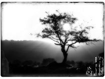 Sun-through-the-tree