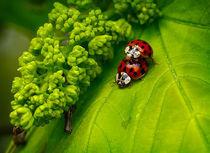 Ladybug rodeo von Alexandre Gaillard