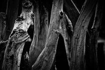 Holz im Licht von Jürgen Klust