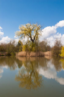 Spring tree at the pond by safaribears