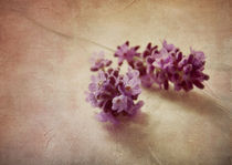 Lavender still life by Franziska Rullert