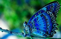 Blue Butterfly von lefeber