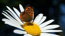 Auf-nektarsuche-filtered