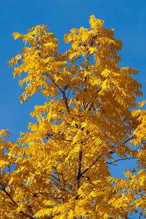 Autumn is near von safaribears