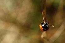 Ladybird von szymek drobniak
