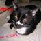 Slycat