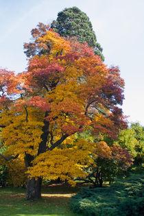 'Autumn is near' von safaribears