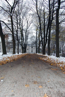 leafy pathway in winter von Sara Kennedy