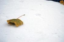 leaf lost in winter von Sara Kennedy