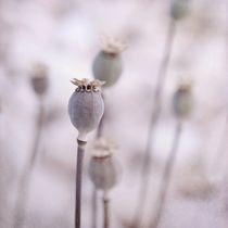 Poppyqueen
