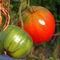 Pomodori-campanese