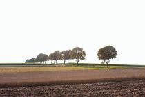 Bäume im Feld von Michael Guntenhöner