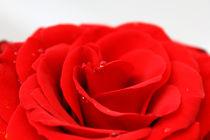 Bloom by rheaeve