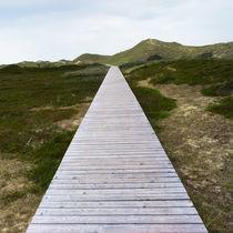path#5 von oc