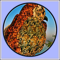 Virtual-owl