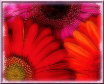 Water the Gerberas by Assie Schell