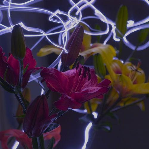 Maxnemo-flowerflow-1