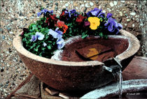 Pansies-in-a-fountain