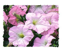 Watercolor-petunias