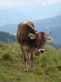 Allgäuer Kuh von Ka Wegner