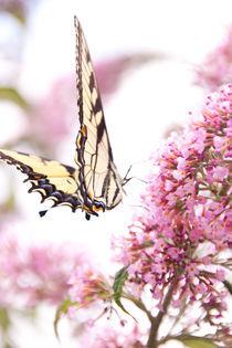 Harvesting nectar von Sam Figueroa