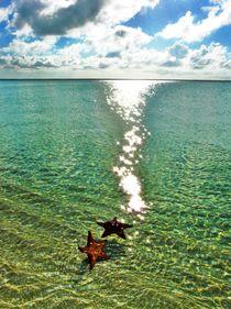 Starfish alone in the Ocean von Karina Stinson