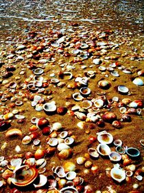 How many sea shells do you count? by Karina Stinson