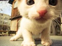 meow von roxanici