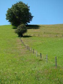 Alpenwiese von Ka Wegner