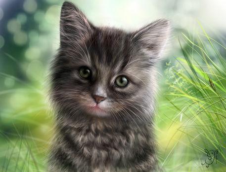 Kotek-w-trawie