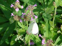 Schmetterling by Ka Wegner