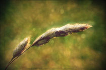 Grassinthewind-c-sybillesterk