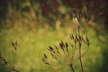 Grassinthewind-ii-c-sybillesterk