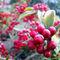 Ice-berrys