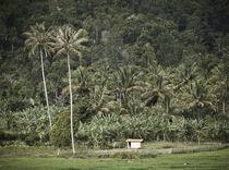 tropico paradiso von yudasmoro